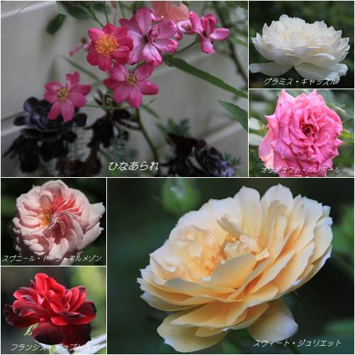 8月のバラ Ⅱ