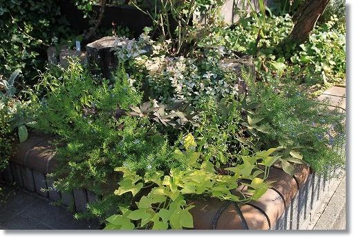 イポメア花壇