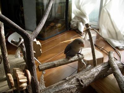 小鳥の遊園地 043