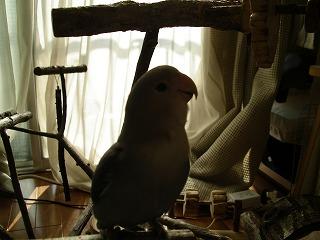 小鳥の遊園地 033