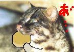 cdf570ae6367a08c1_20091211160617.jpg