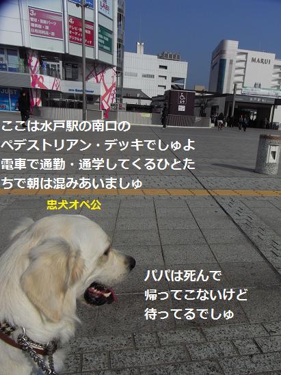 忠犬オペ公