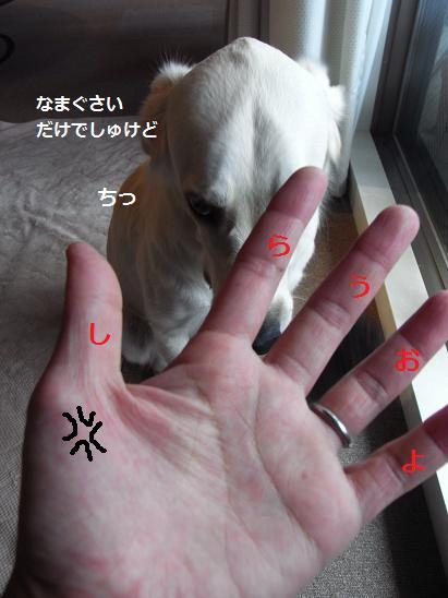しらうおの指