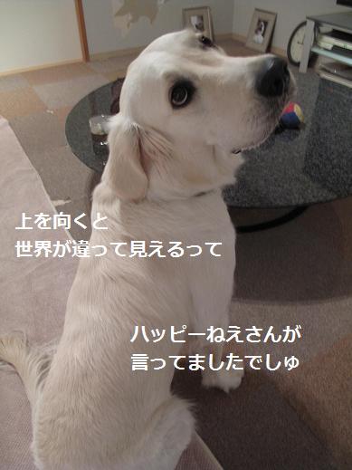 だから泣かないで