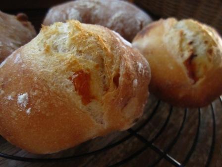 南部小麦杏プチハードパン