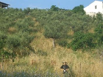 2009年夏下草