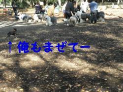 20091115-2.jpg