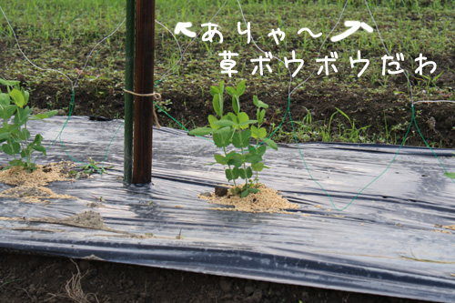 2009_10_01_04.jpg