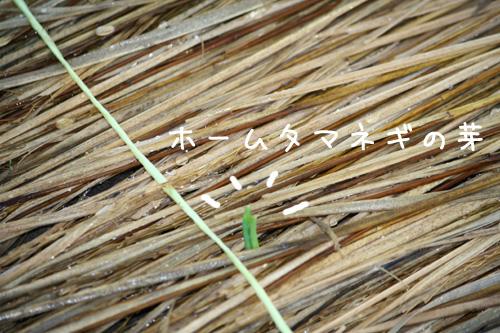 2009_9_17_4.jpg