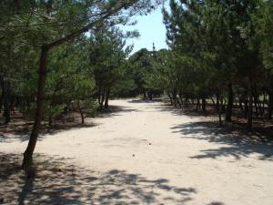 国立公園白鳥の松原