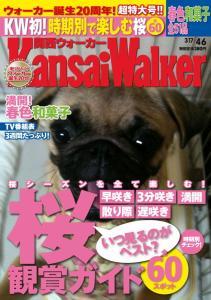 kansai walker 桜特集!