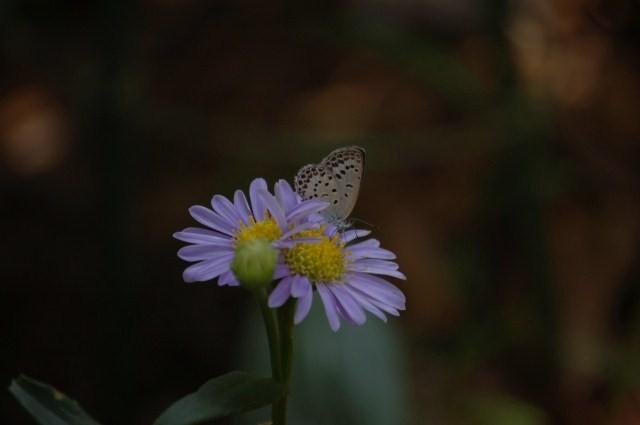 花と蝶~♪