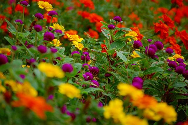 いろんな花々が美しい!