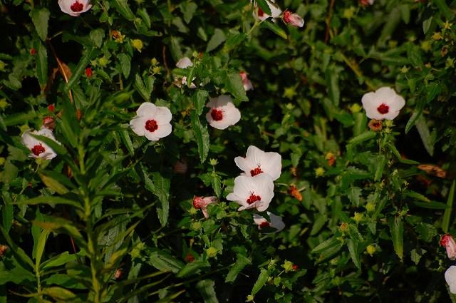 5cm位の小さな花です