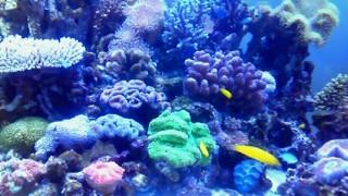 8月4日 水族館熱帯魚