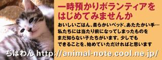 azukari_catB.jpg