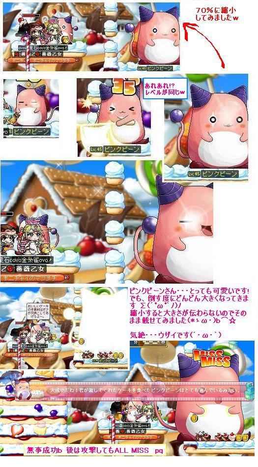 Maple_091030_231954 ピンクビーン