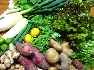20111031お野菜