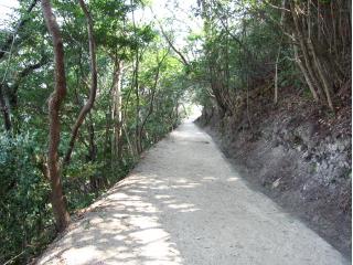 20110228山道