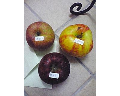 りんごたち