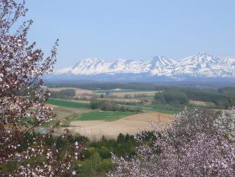 深山峠の桜