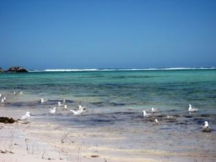 lancelin beach2