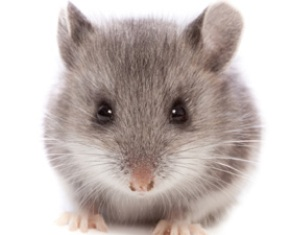 mouse-278x225.jpg