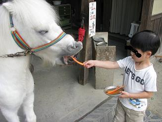 白馬ににんじんをあげる