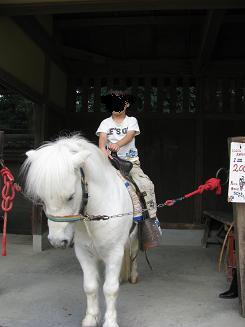 馬に乗ってみる