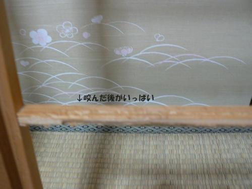 p1140260.jpg