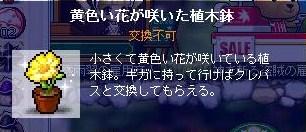 Maple100607_101743.jpg