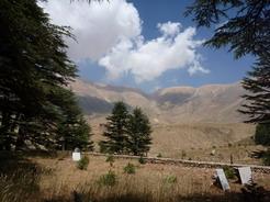 20jun2010 レバノン杉の森からレバノン山脈の峰を望む
