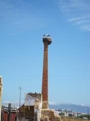 21jul2010 町中の塔らしきものは全て巣に