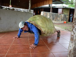 21aug2010 ゾウガメの甲羅は重い