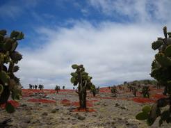 22aug2010 島にはウチワサボテンの木が点在