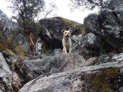 27aug2010 急な岩場を下るのをためらうメス・ライオン、ならぬクトゥース