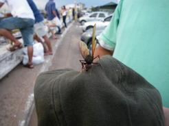 22dec2010 巨大な羽アリ