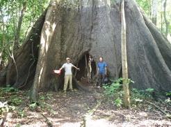 24dec2010 浸水林の巨木