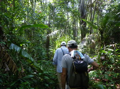 24dec2010 ジャングルを散策
