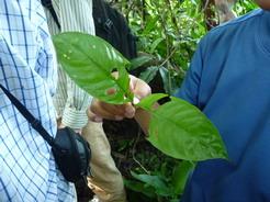 24dec2010 サロメチールのにおいのする木