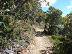 5mar2011 よく整備された登山道
