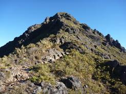 5mar2011 チリポを見上げる