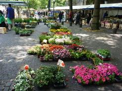 2jul2011 同じく花市 頻繁にいろんな市が立って面白い