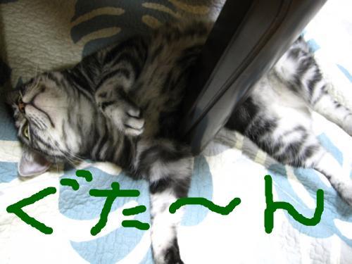 snap_pasiyuru_20117521114.jpg