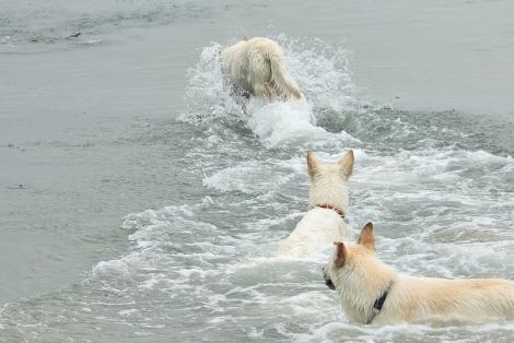 ブランカ泳法!