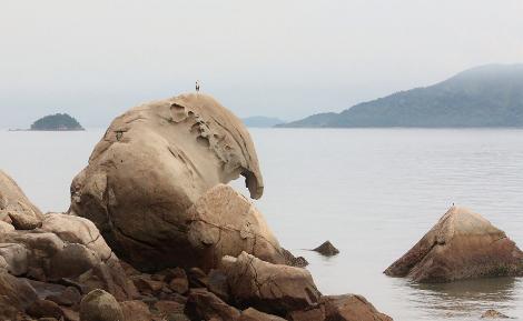 象岩さんと青鷺
