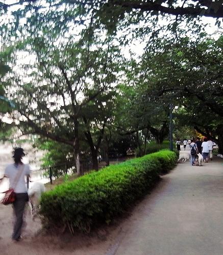 広島を犬と歩く