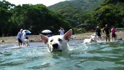 テーオ泳ぐ!