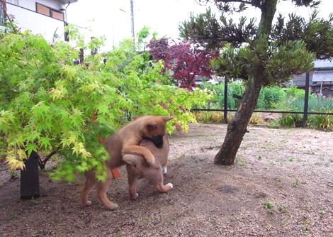 お庭でタックル