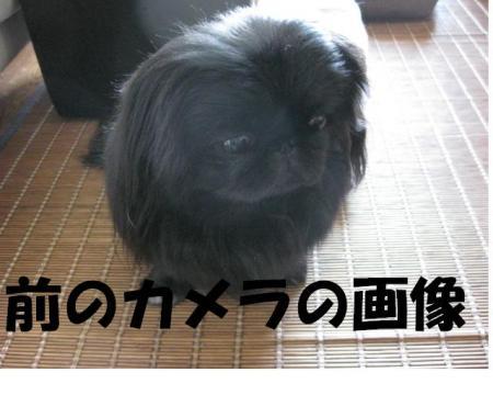 001_convert_20100105090724.jpg